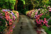Flower Gardens / by Cheryl Morgan