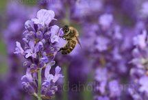 Garden Flowers/Shrubs