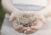 hnízda