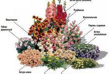 схемы клумб цветников