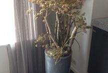 Berenklauw / Berenklauw, berkenhout en vetplanten