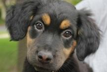 doggy adoption