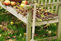 Erntezeit / Ob Äpfel, Birnen, Weintrauben, Kürbisse oder Pilze – jetzt füllen sich die Erntekörbe wieder mit leckeren Köstlichkeiten aus der Natur