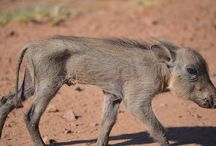 My wildlife photos / Pictures I have taken in the Pilanesberg and Kruger National Parks
