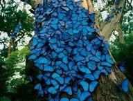 Jah's marvelous creation / by Sonya Lee-Vidal