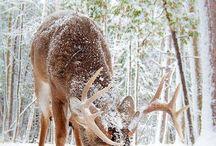 deer and wildlife