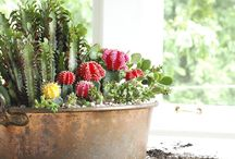 Moss, succulents and cactus / by Thais Wolf