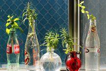 Gardening ... my stress relief!!! / by Kelly Meyer