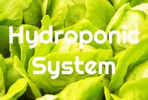 Blog / Hydro World is your leading hydroponics supply store in Australia that offers a variety of superior quality products to help you yield larger and healthier crops. We offer excellent hydroponic grow tents, hydroponic grow lights, hydroponic nutrients, and more. Visit https://www.hydroworld.com.au/ to learn more about major hydroponic systems or call us at (08) 8262 8323.