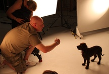 Behind the scenes / by Dogsclub .TV