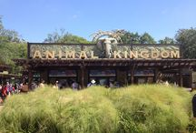 Animal Kingdom, Walt Disney World, Florida / Just love Animal Kingdom
