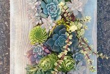 Succulents ❤❤❤