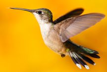 http://kerryseo.co.uk/tips-to-recover-from-hummingbird-penalty/