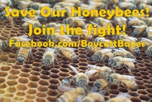Save Our #Honeybees & like www.Facebook.com/BoycottBayer / STOP Bayer from making neonicotinoids! Save Our #Honeybees & like http://www.Facebook.com/BoycottBayer