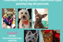 Fundraising / As with all rescues, sometimes GDU hosts fundraising events for our furry friends.