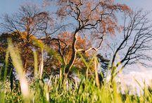 Nature / Respire
