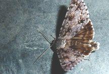 B.bichos. insecto.insectas / by Lucía Romero