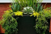 Containers with a 'WOW' factor