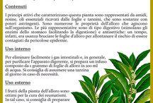 il calendario delle piante
