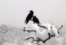 If I were a Bird / by Lisa Darley-Graham