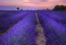 Wanderlust\France