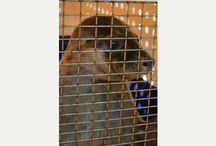 Animals in Gower