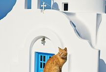 Street Cats / Pictures of beautiful cats living in the street