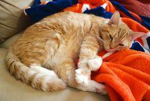 Meow Monday / Meow Monday - photos of my cute cats!