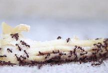Ants & BBQs