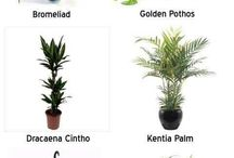 low maintenance plants