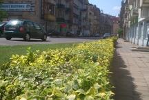 Wiosennie na Starym Mieście | Spring in Poznan's Old Town