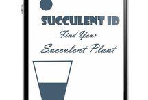 succulent ID