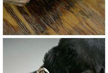 Dogs / DIY, schnauzer standard