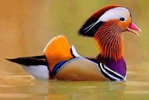 Fabulous Fowl and Beautiful Birdies / by Annie D.