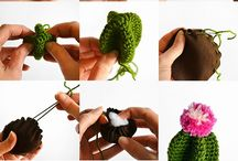 cactus amuguris