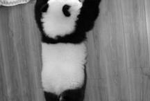 { photo : panda ]