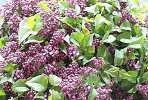 Favorite Flowers May