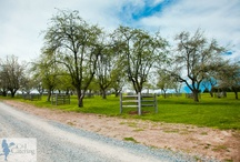 Ironstone Ranch and C&J Catering / Are you looking for a place to host your wedding, reception, corporate event or special activity with a genuinely unique experience?  If so, Ironstone Ranch has the services and facilities to accommodate your needs.