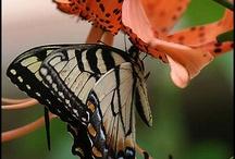 Flutterbees