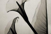 ✿ les fleurs du mal  /  . . .  poison paradise . . . / by ☾ murasaki moon ☽