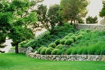 garden \\ planting \\ slope
