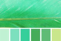 color palattes