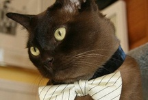 AppleKor Kats / CATS! I love cats & posts that others with kitties love to share. / by Kori Jones