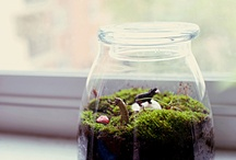 Frogs, Terrariums, etc... / by Inspiration Exhibit