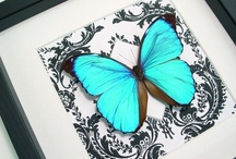 Butterflies / by Pennie Collins Gitary