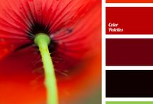 Design - Colors / Everything color / by Carah Kristel