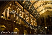London Event Photographer Natural History Museum