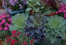 Plants and gardening ideas