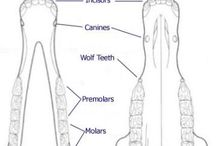 Equine Anatomy / Learn all about horse anatomy with these pins and see how equines are put together.