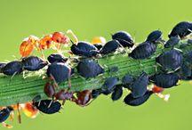 Вредители и болезни растений